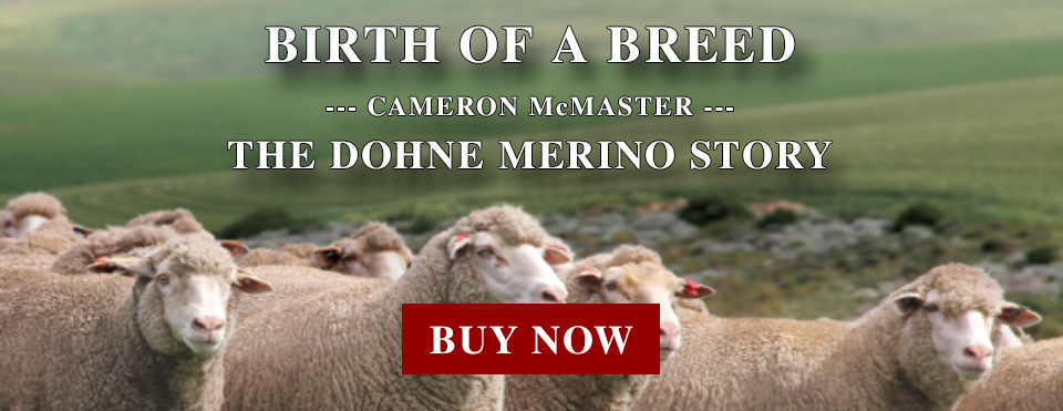 dohne-merino-birth-of-breed