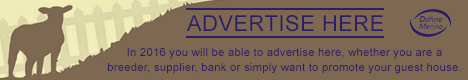 advertise-here-banner-this-side-up-media